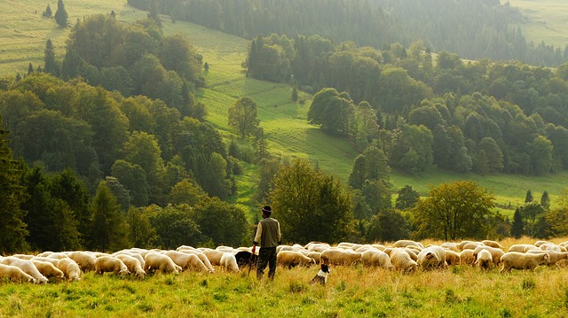 sheep-farmer shepherd agriculture sustainable practices