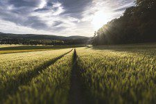 sustainable solutions field-grass crop